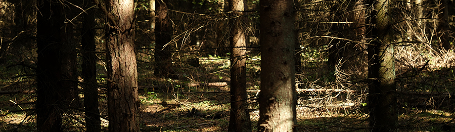 Die Wälder von Masuren